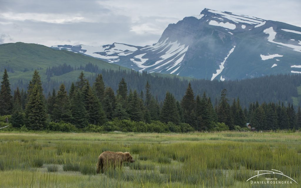 Bears in fantastic landscapes. © Daniel Rosengren