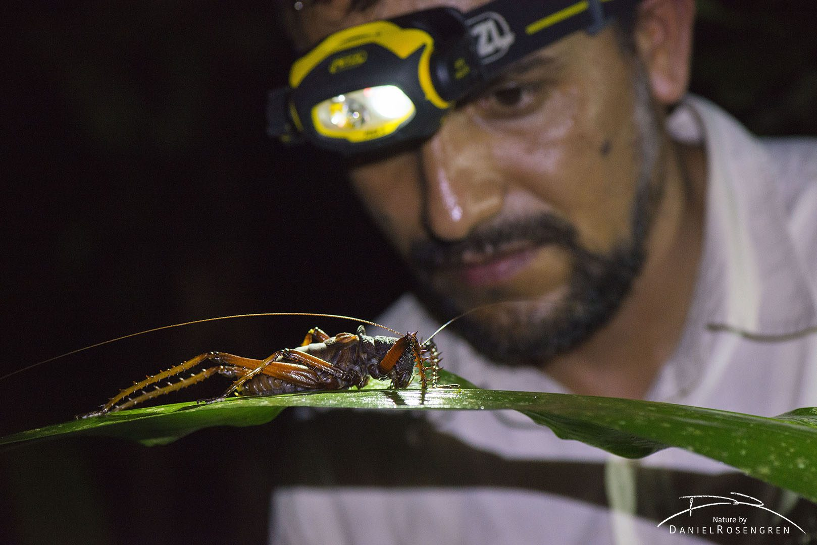 Claus Garcia and a giant Katydid in Yaguas. © Daniel Rosengren