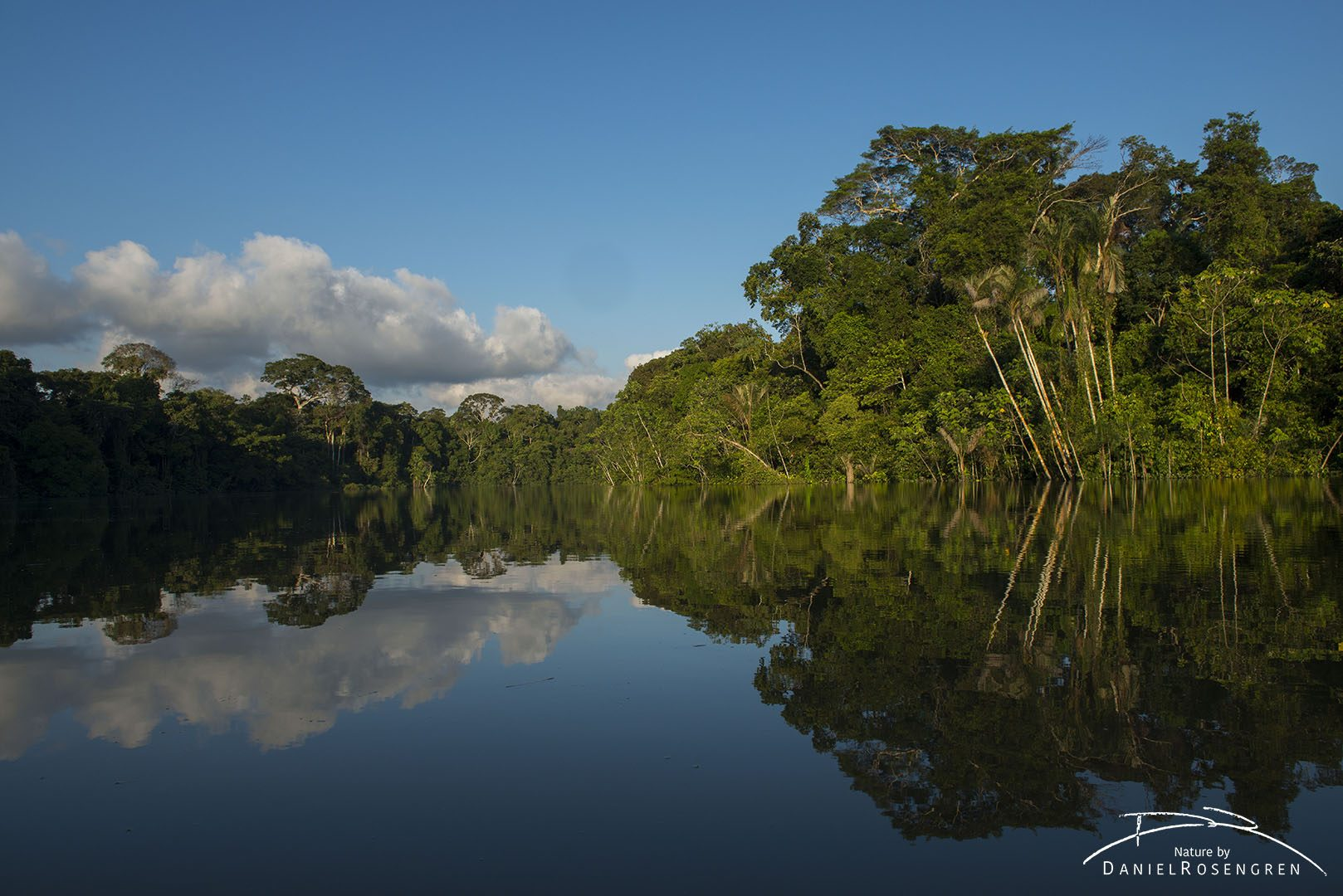 The rainforest along the River Yaguas. © Daniel Rosengren