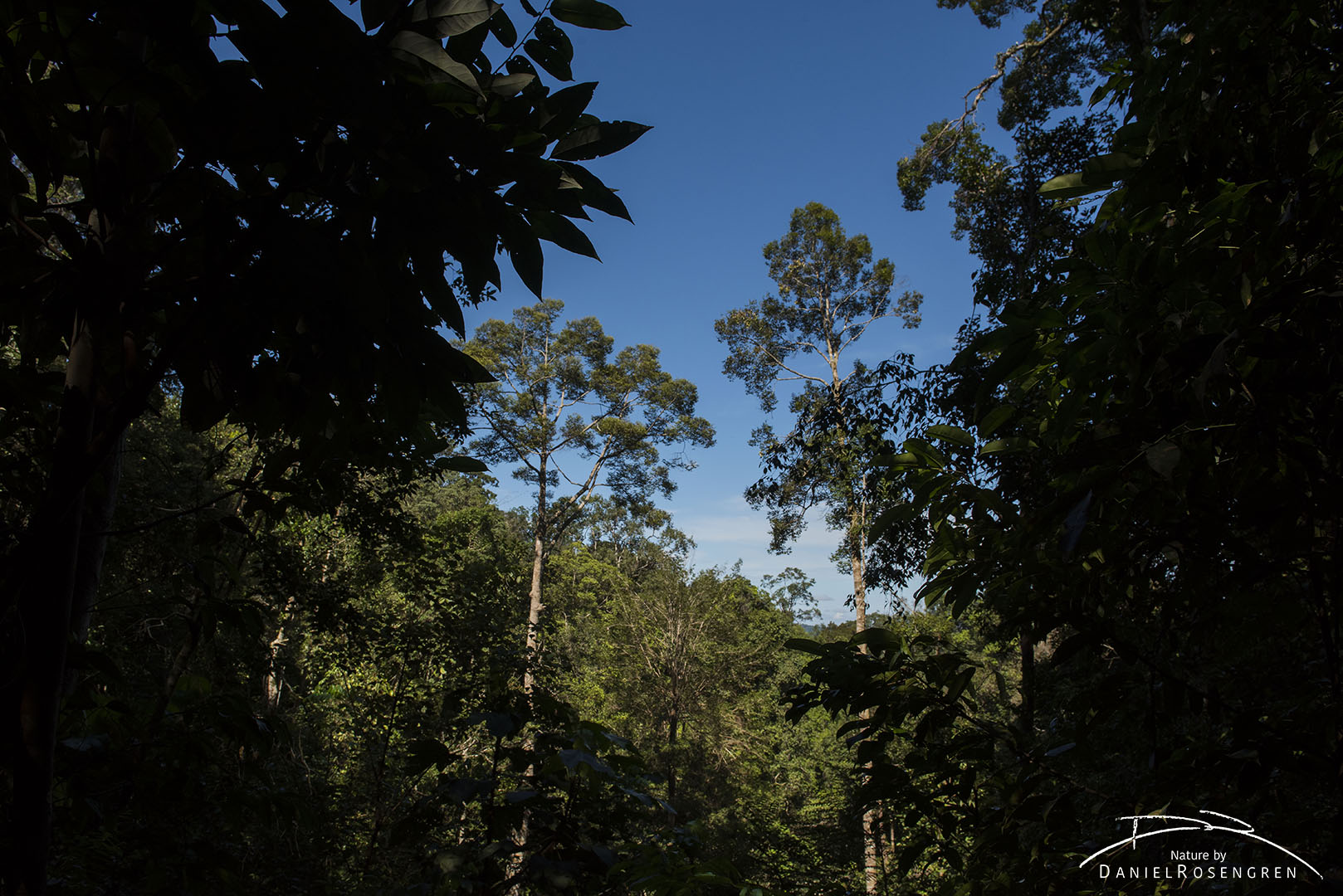 The rainforests of Bukit Tigapuluh, Sumatra. © Daniel Rosengren