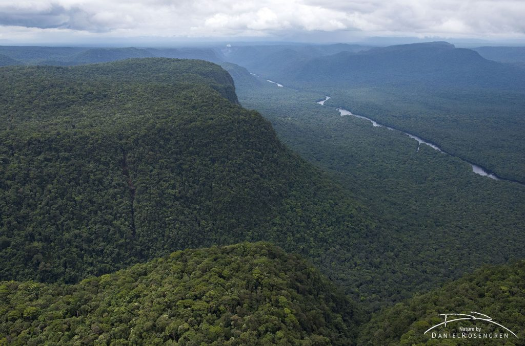 The rainforest in Kaieteur NP. © Daniel Rosengren