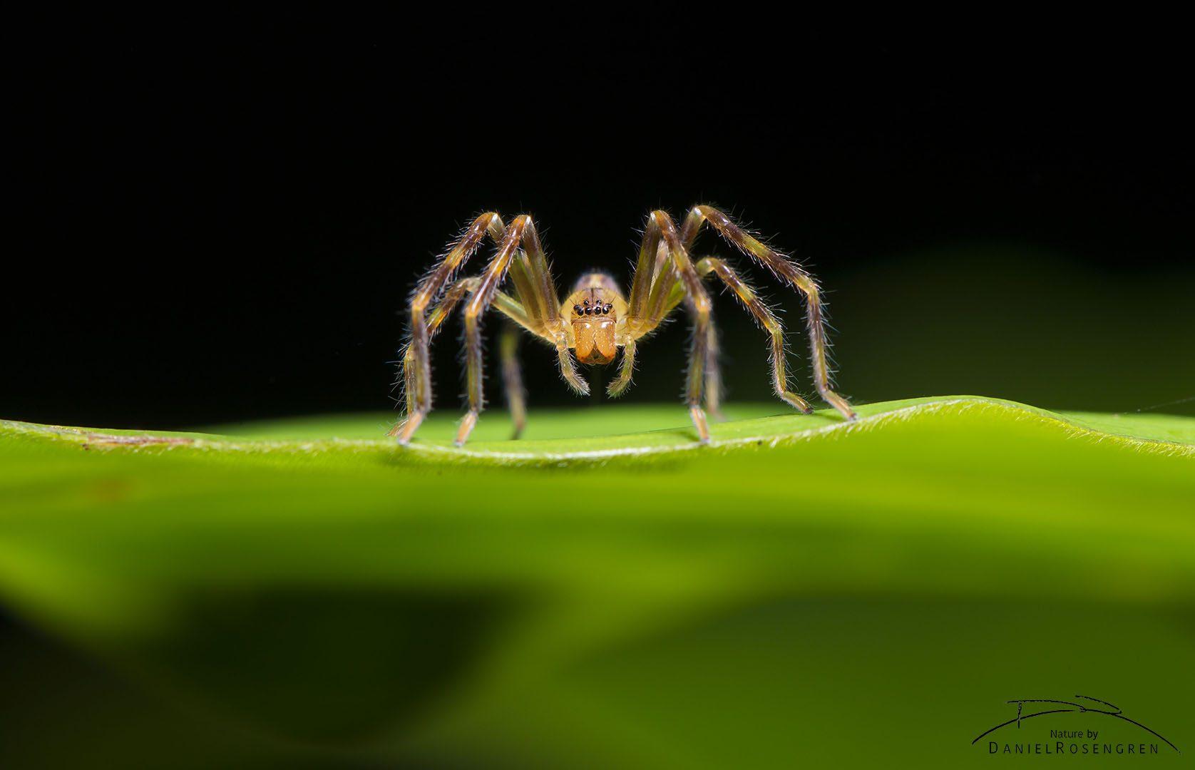 A spider in Yaguas. © Daniel Rosengren