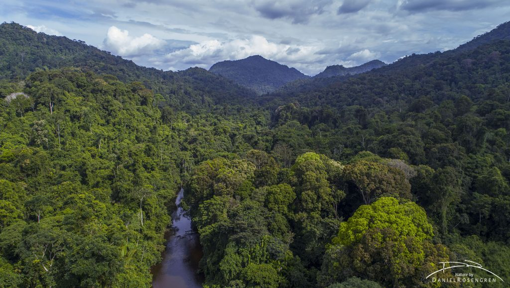 An aerial photo over the Kanuku Mountains Protected Area, Guyana. © Daniel Rosengren