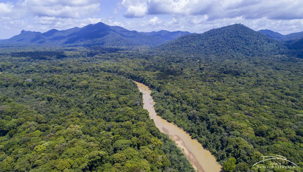 An aerial photo over the Kanuku Mountains Protected Area, Guyana. The Rupununi River flows from the mountains. © Daniel Rosengren