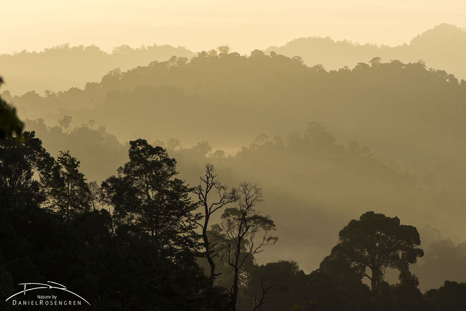 A view over Bukit Tigapuluh NP at sunrise, Sumatra, Indonesia. © Daniel Rosengren