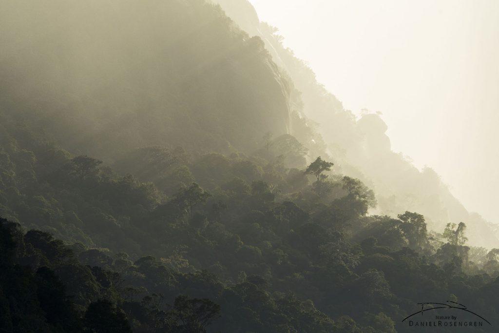 A view of the rainforest at sunset. © Daniel Rosengren