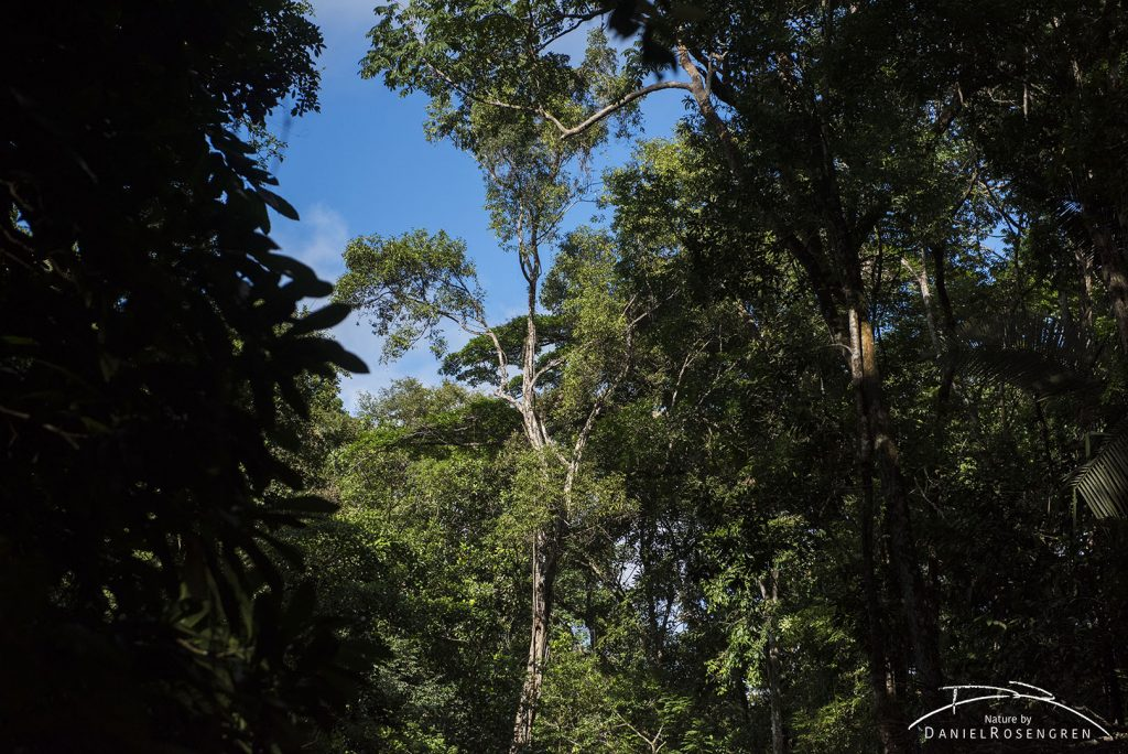 The rainforest. © Daniel Rosengren