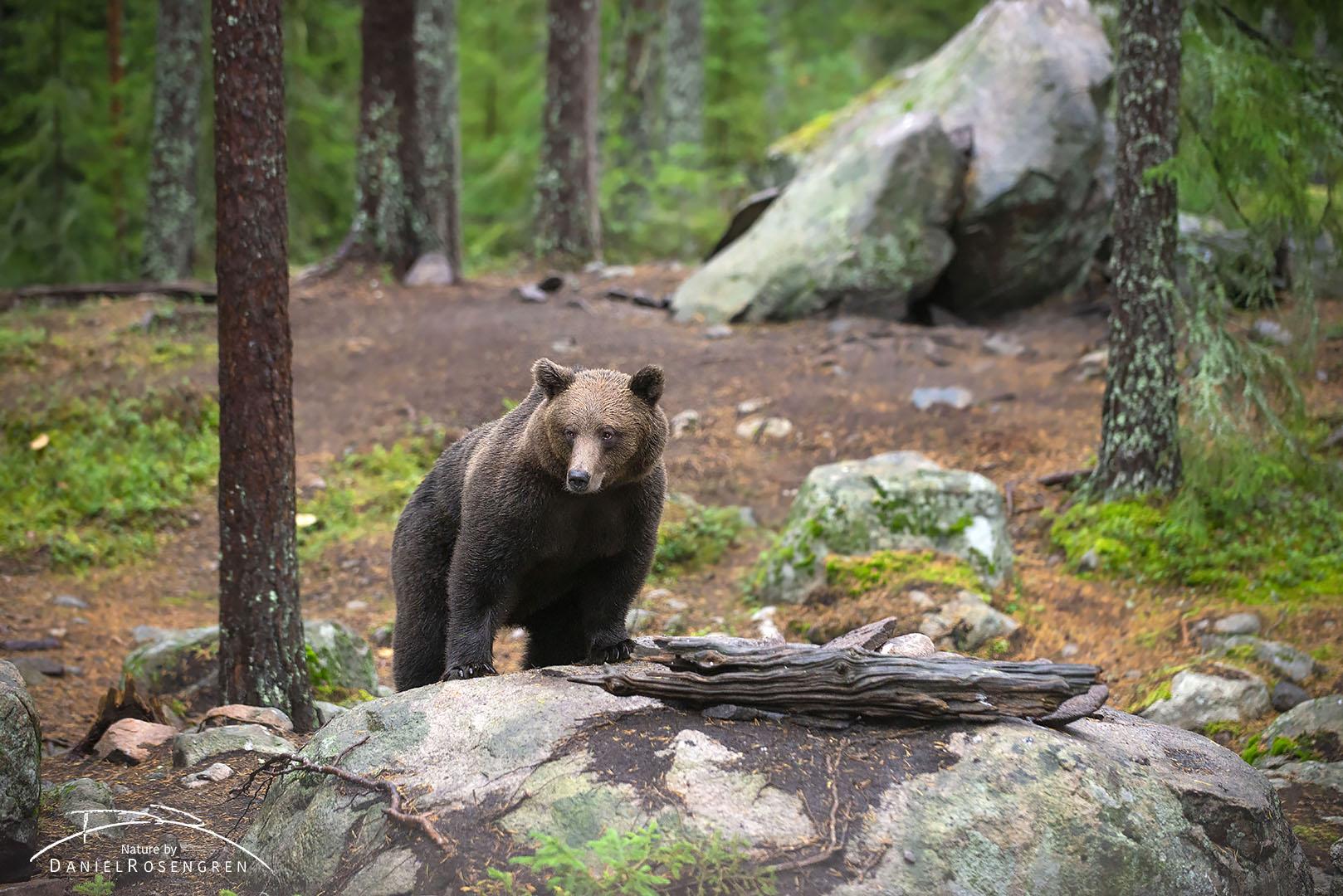 _DTR0804_Bear