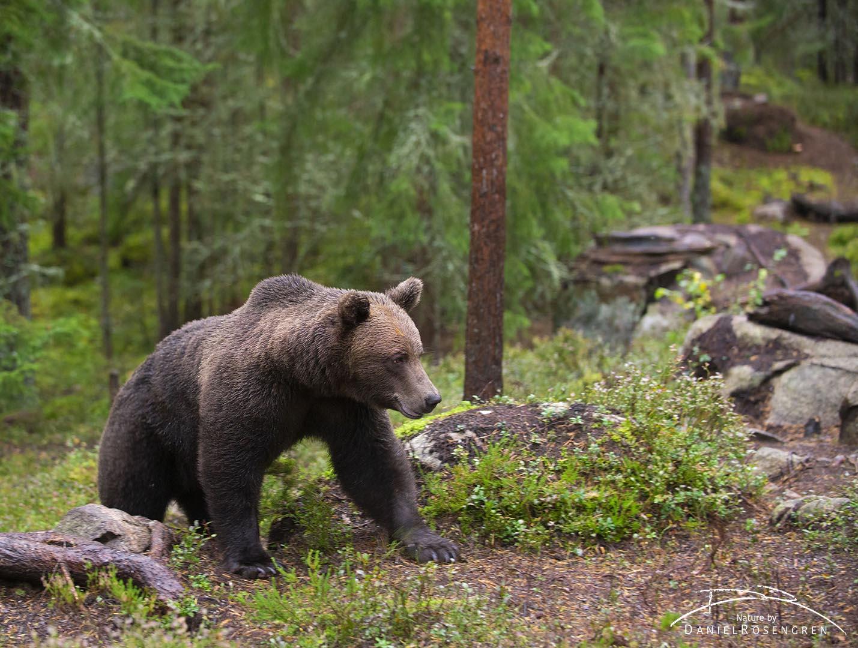 _DTR0827_Bear